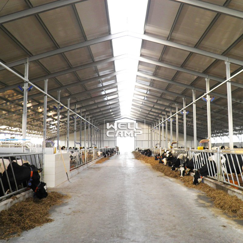 s31 light cowshed steel steel shed