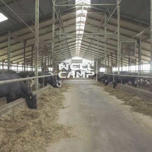 Sandwich Panel Color Steel Structure for Cow Shed, Wellcamp S-31